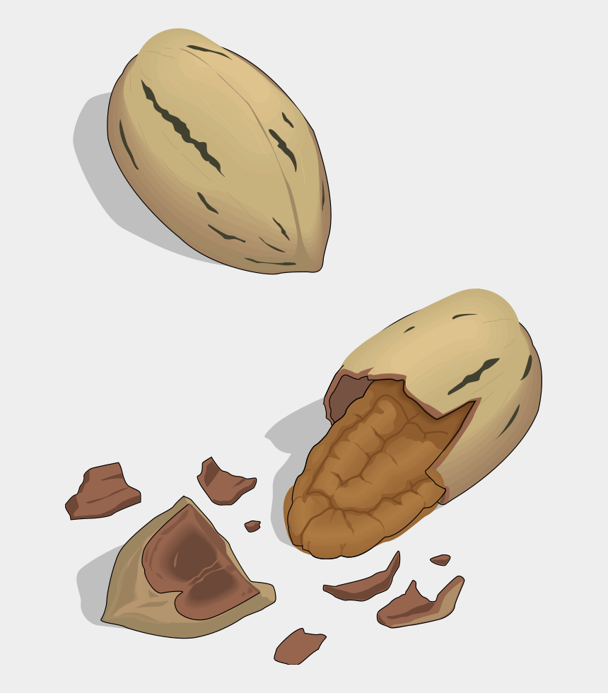 nut clipart, Cartoons - Nut Clipart Free - Pili Nut Clipart Png