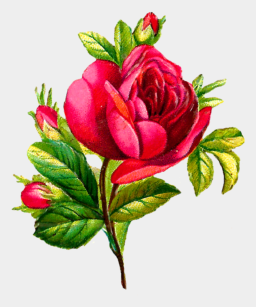 roses flowers clipart, Cartoons - The Second Digital Rose Image Is Of Several Red Roses - Digital Flower Png