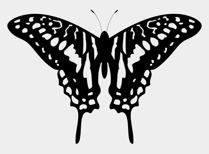 swallowtail butterfly clipart, Cartoons - Swallowtail Butterfly Tattoo Stencil Designs Brush-footed - Butterfly Design White Png