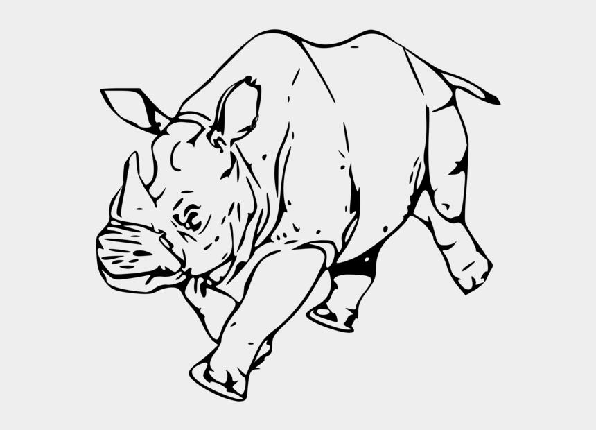 rhino head clipart, Cartoons - Rhinoceros Cattle Horn Coloring Book Mammal Free Commercial - Clip Art