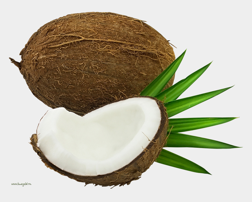 coconut oil clipart, Cartoons - Coconut Images, Coconuts, Clip Art, Juices, Pictures - Coconut Png Free Commercial Use