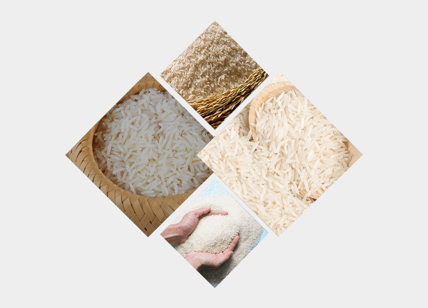rice grains clipart, Cartoons - Origin Of Pakistani Basmati Rice For Export - Basmati