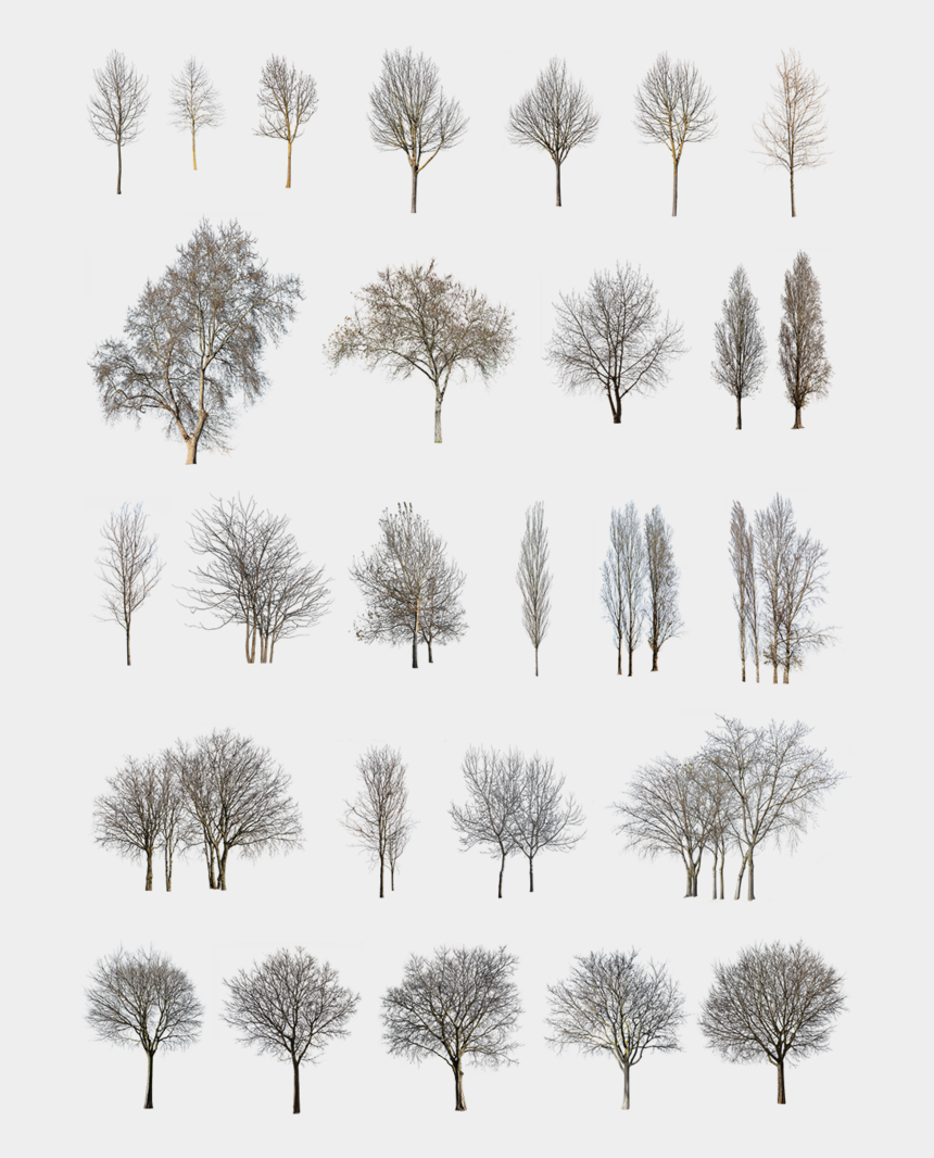 topiary clipart, Cartoons - 27 Winter Trees Pack - Pond Pine