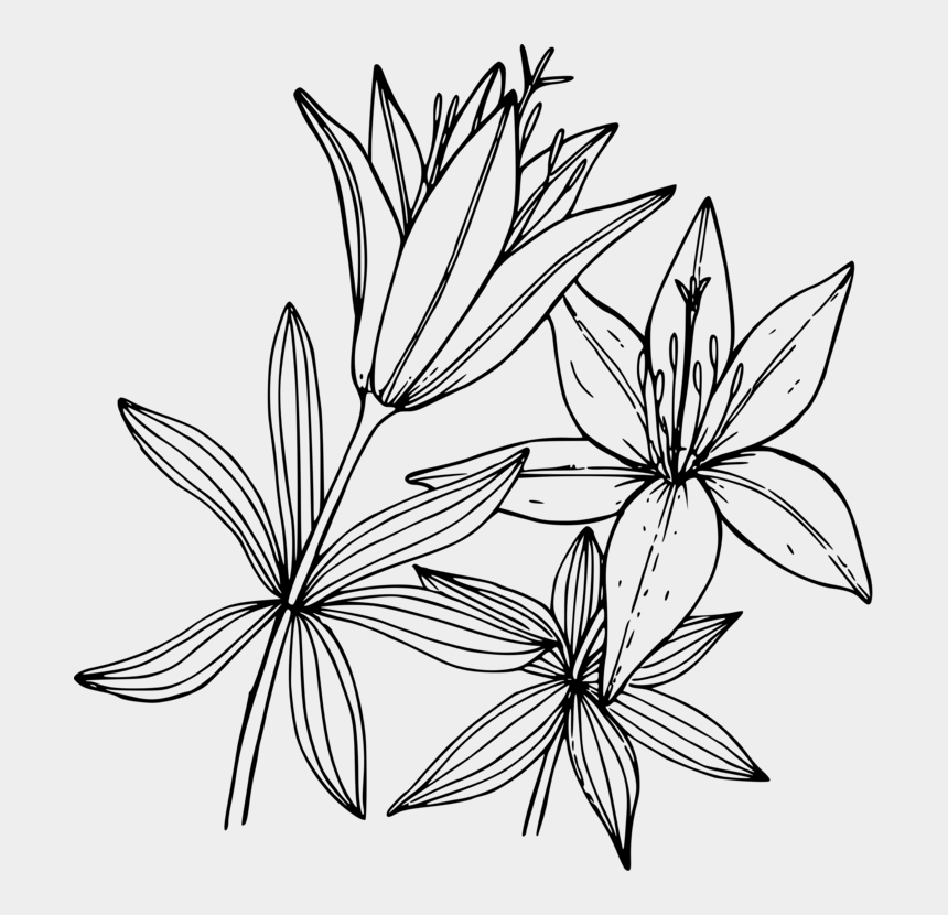 white lily flower clipart, Cartoons - Wood Lily Flower Coloring Book Floral Design - Wood Lily Drawing