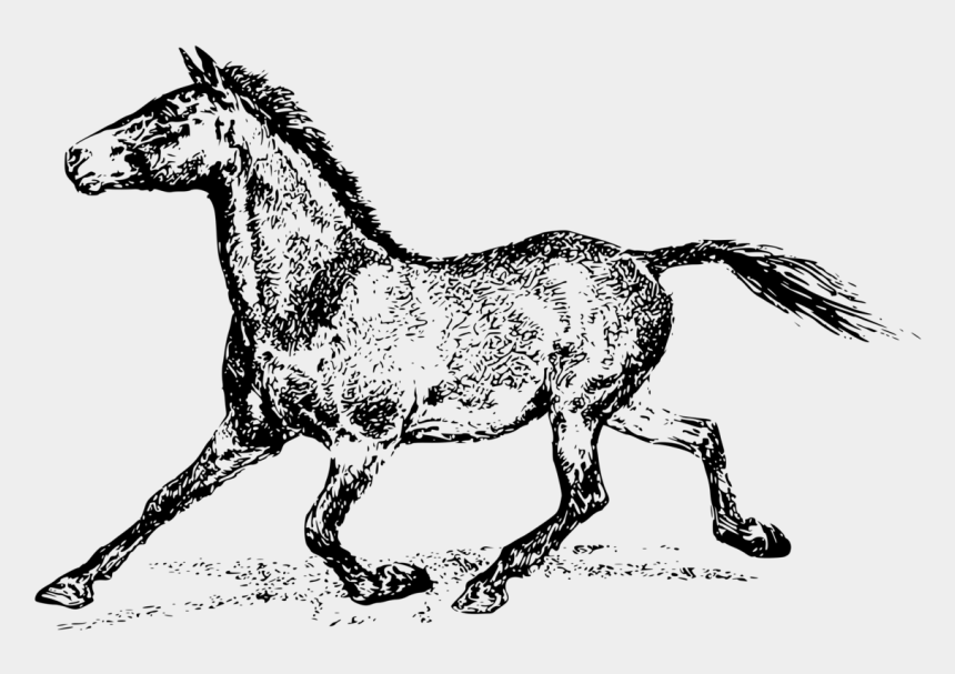 mule head clipart, Cartoons - Mule Mustang Stallion Foal Pony - Horse