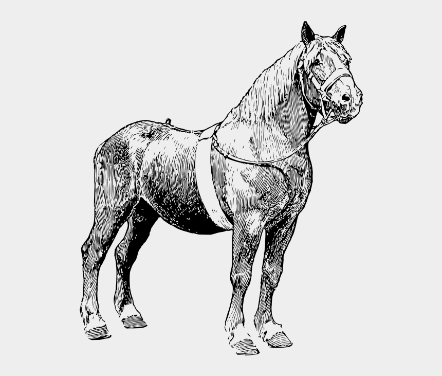 hold your horses clipart, Cartoons - Horse - Mane - Mane