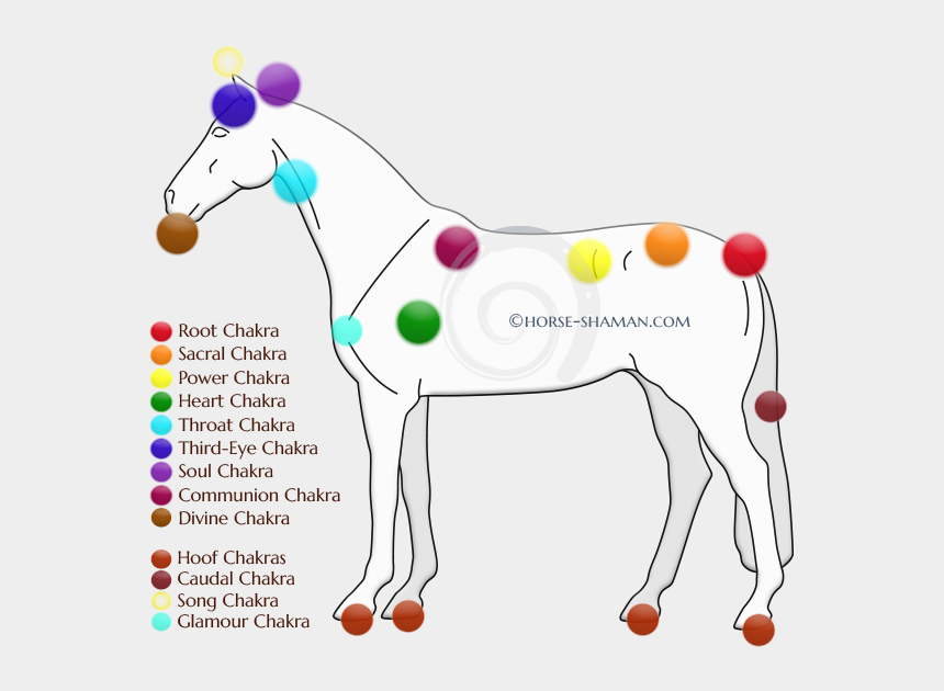 horse eating grass clipart, Cartoons - Part - Chakras Of The Horse