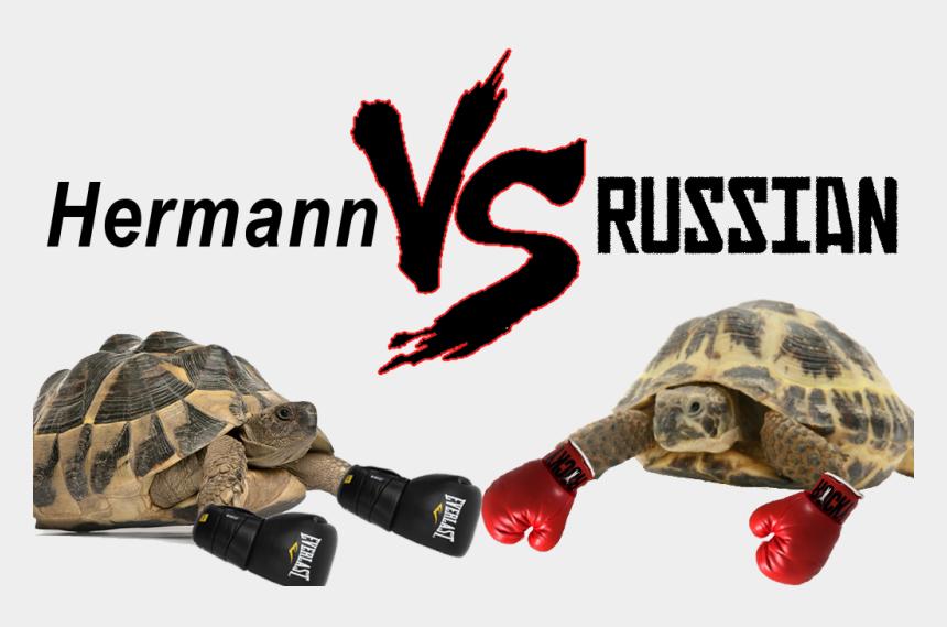 gopher tortoise clipart, Cartoons - Hermann Vs Russian Tortoise - Horsefield Tortoise Vs Hermann