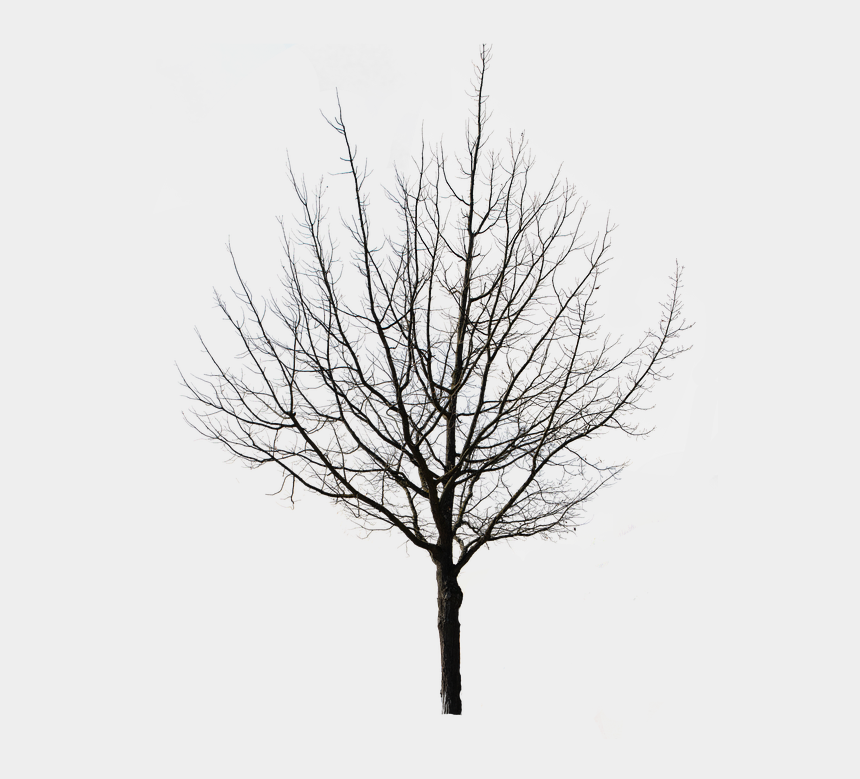 weeping willow clipart, Cartoons - Tree Isolated Nature Autumn Weeping Willow Tap - Deciduous Tree In Winter