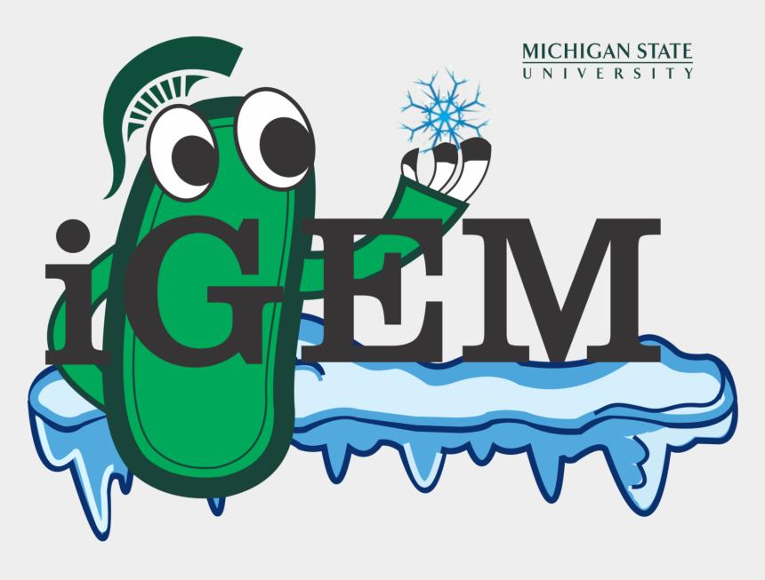 michigan state university logo clipart, Cartoons - Michigan State University