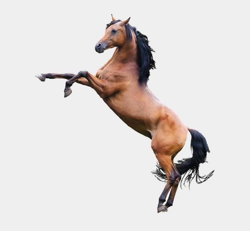 caballo clipart, Cartoons - Caballo Sticker - Horse Rearing Png