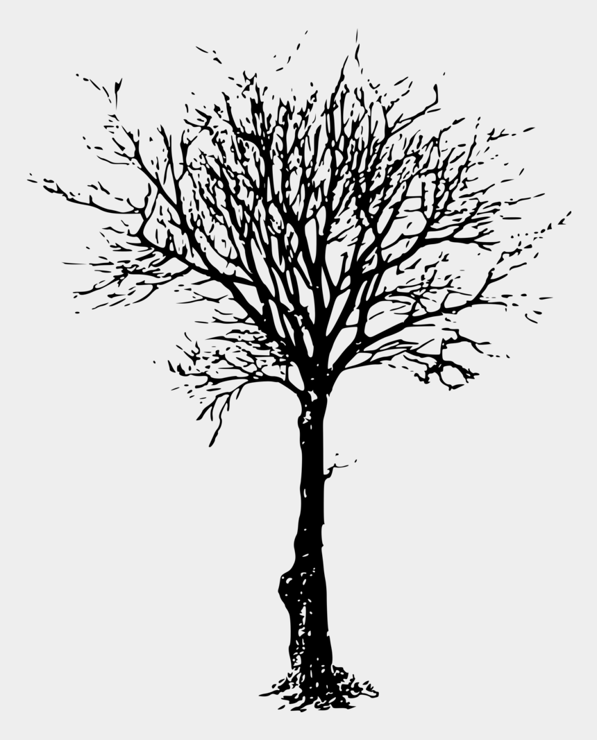 clipart tree branch silhouette, Cartoons - Twig Drawing Tree Limb - Tree Leafless