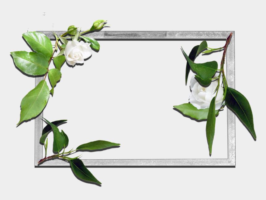 memorial flowers clipart, Cartoons - Flower Frame Clipart - Flower Frames