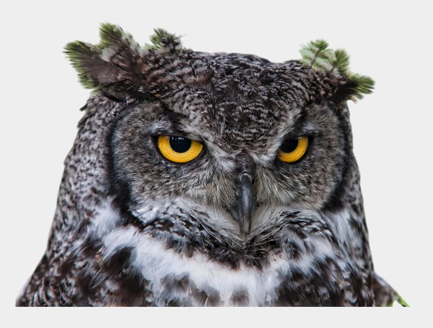raptor bird clipart, Cartoons - Owl,grand - Bird Head Png
