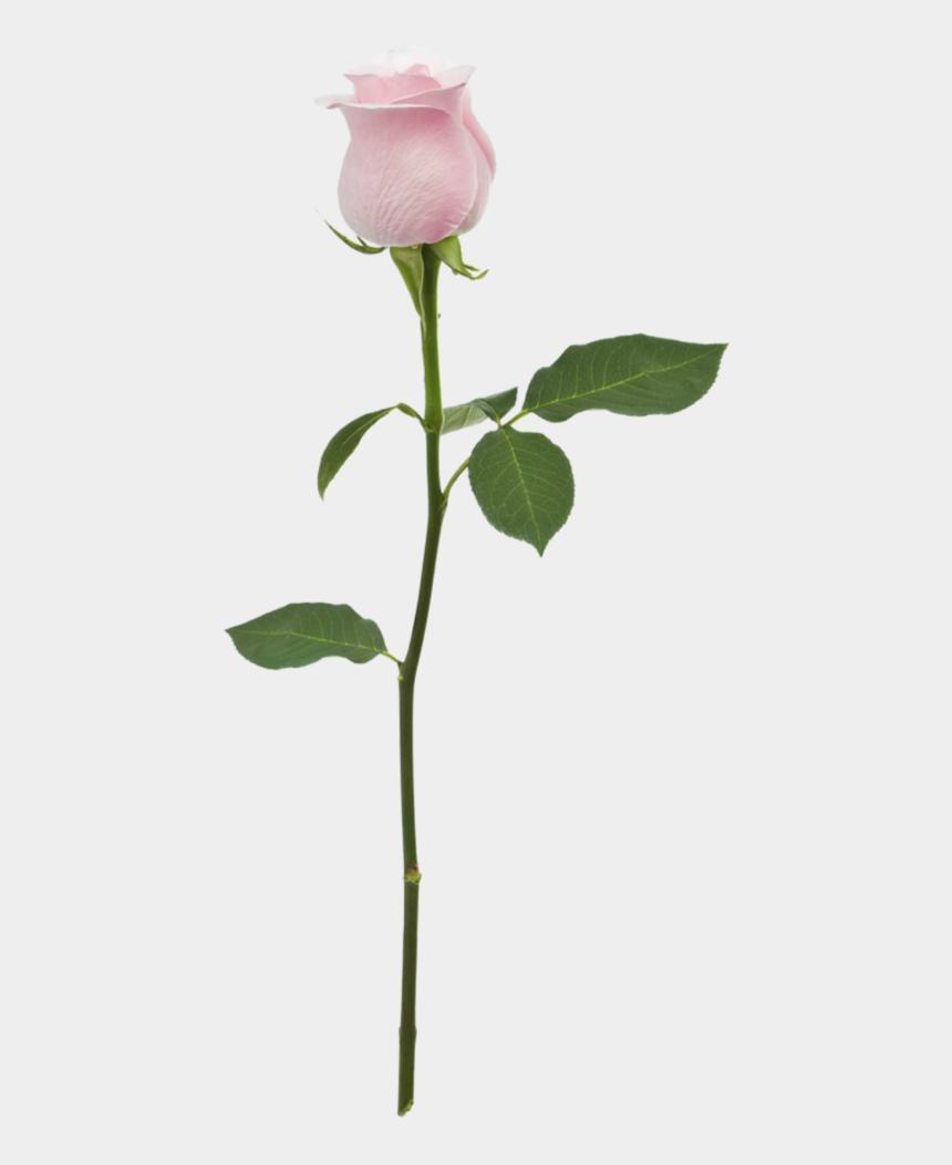 pink flower with stem clipart, Cartoons - Flower Overlay Png - Stem Pink Rose Png