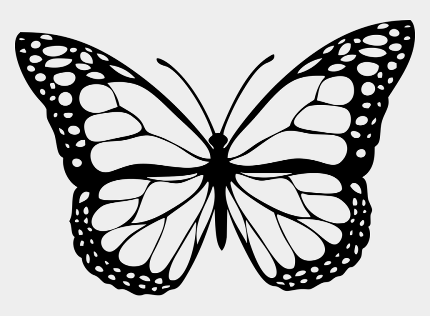clipart flowers and butterflies black and white, Cartoons - Animal, Butterfly, Design, Insect - Black And White Butterfly Transparent