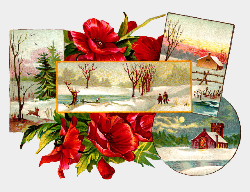 christmas poinsettias clipart, Cartoons - Stock Christmas Image - Poinsettia