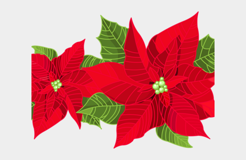 pointsetta clipart, Cartoons - Poinsettia Clipart Transparent Background - Poinsettia Flower Christmas Decorations