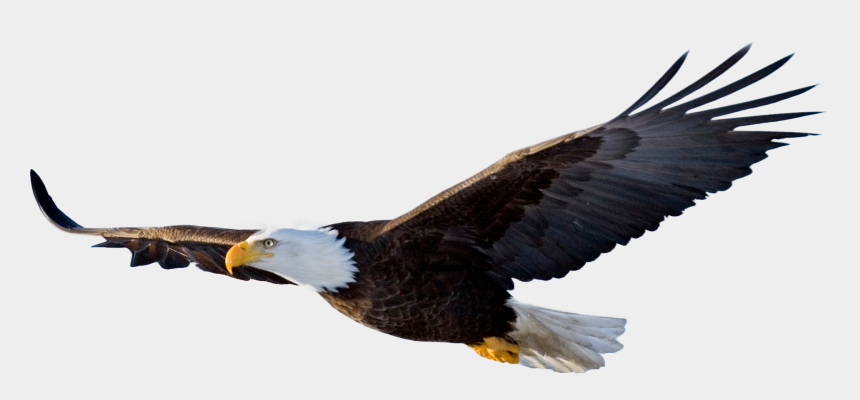 bald eagle head clipart, Cartoons - Bald Eagle Flying By Evelivesey On Clipart Library - Flying Eagle Png