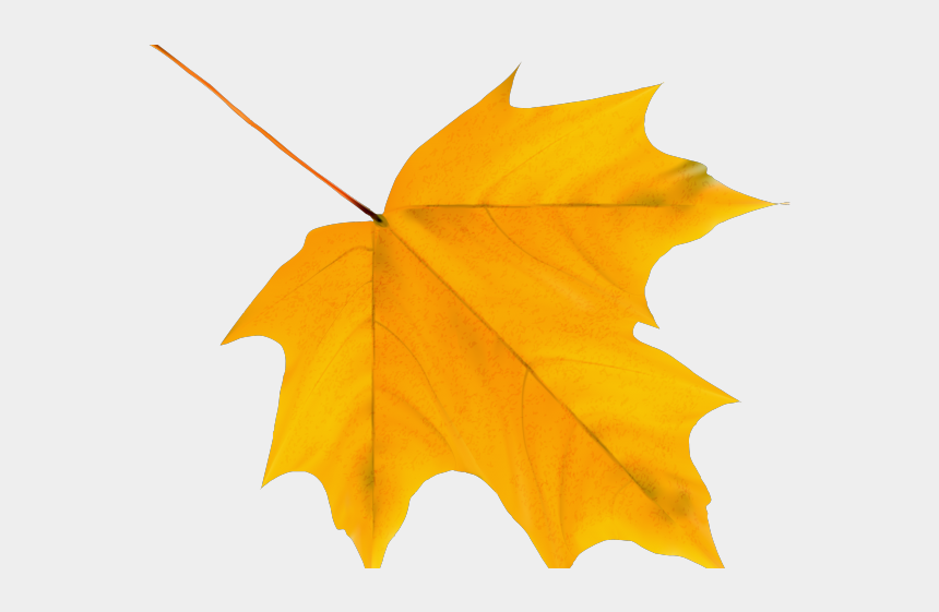 tobacco leaf clipart, Cartoons - Leaves Clipart Fallen Leave - Autumn Leaf Png Transparent
