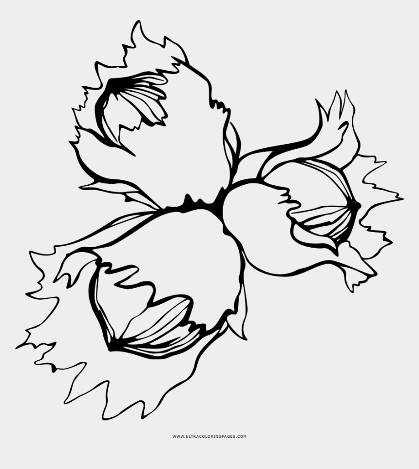 nuts clipart, Cartoons - Opulent Design Nuts Coloring Pages Page Ultra And Bolts - Coloring Pages Nuts