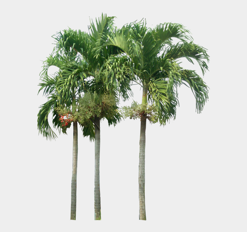 christmas palm tree clipart, Cartoons - Tropical Plant Pictures - Palm Tree Elevation Png
