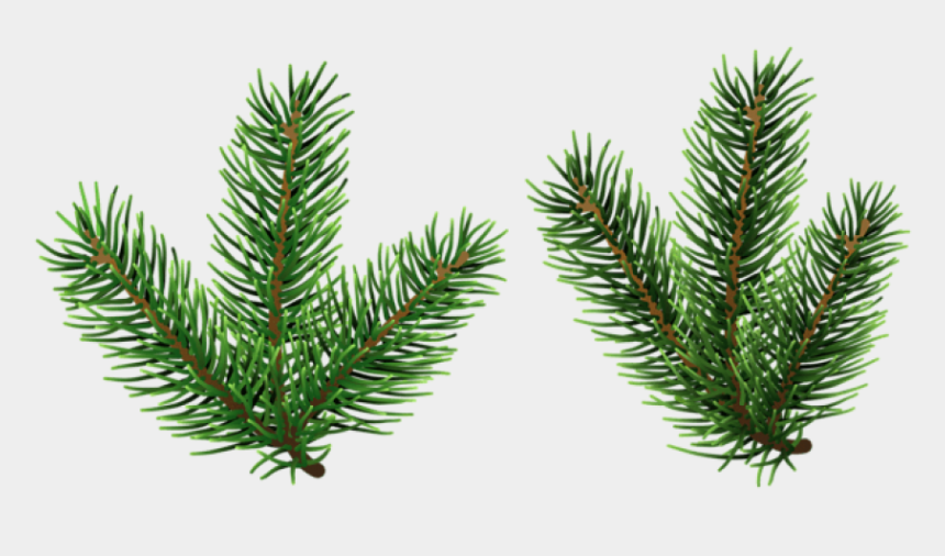 pine branches clipart, Cartoons - Pine Png Free Images - Pine Tree Branch Png