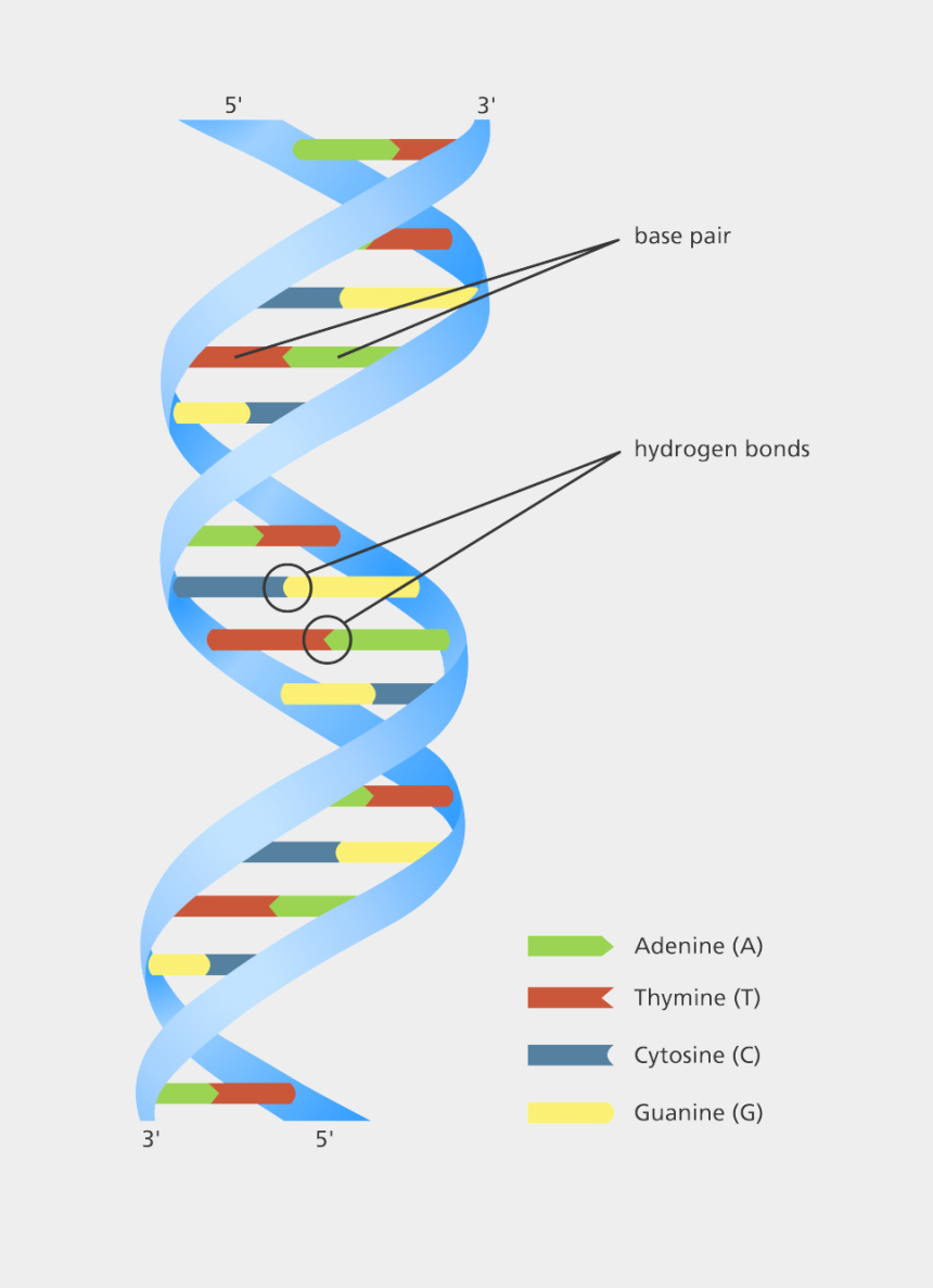 hydrogen clipart, Cartoons - Double Helix - Does A Human Dna Strand Look Like
