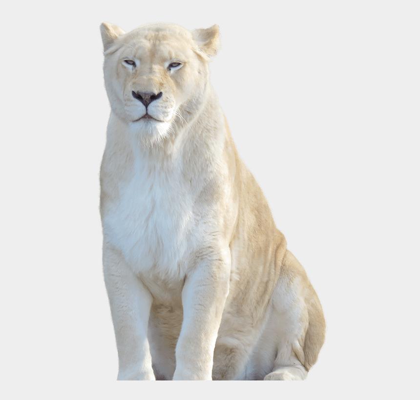 animal eye clipart, Cartoons - White Lion Zoo Animal - White Lion Transparent