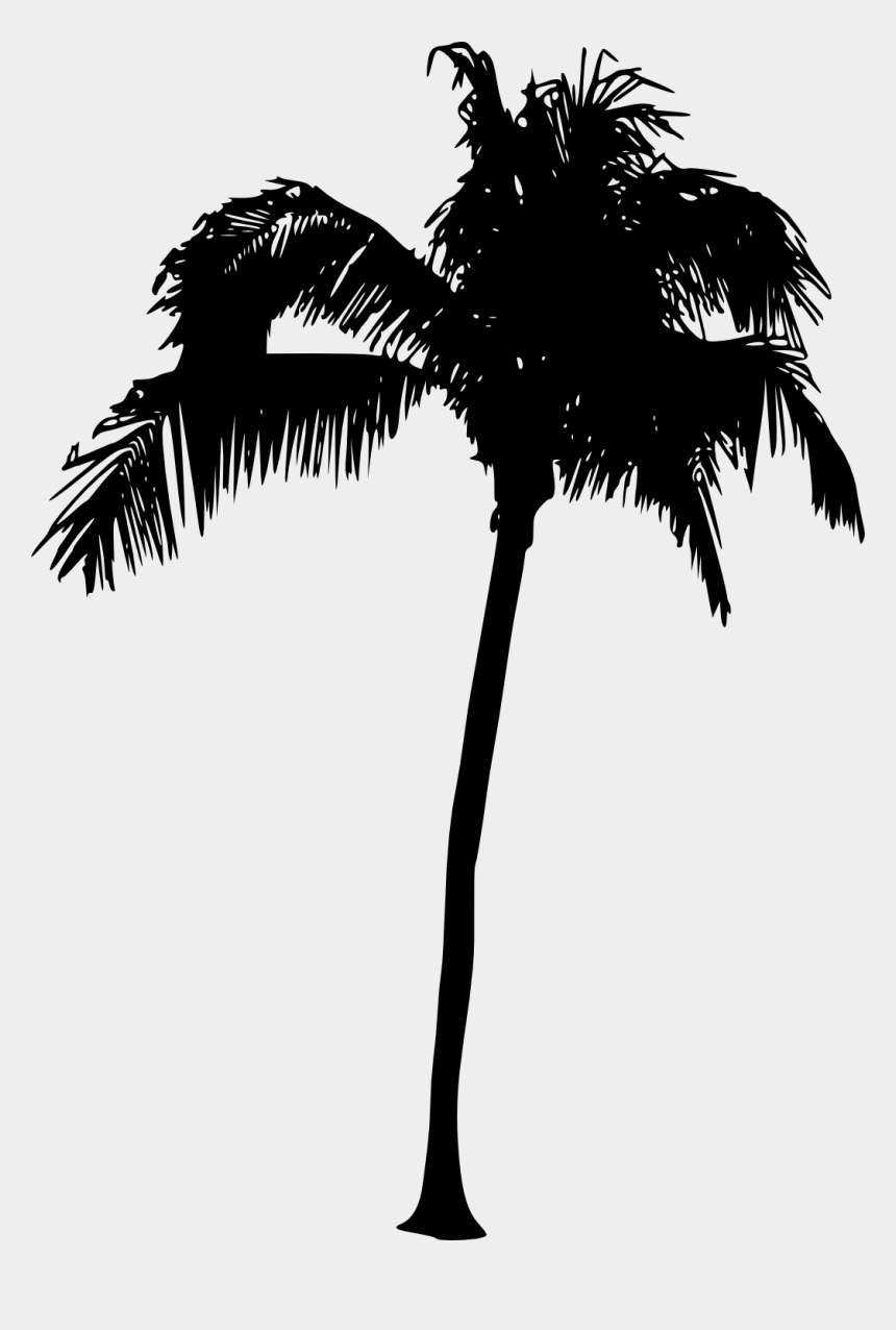 palm tree clipart vector, Cartoons - Coconuts Vector Tree - Palm Tree Silhouette Png