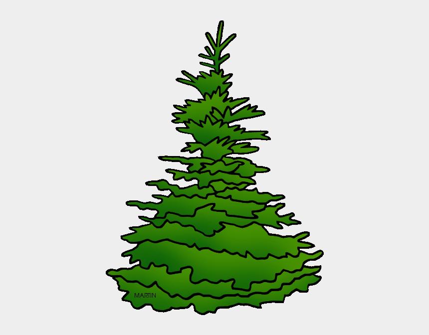 Utah State Tree Black Hills Spruce South Dakota Cliparts Cartoons Jing Fm