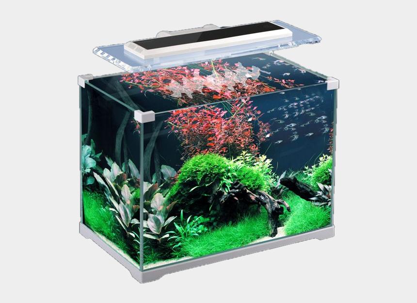 aquatic plant clipart, Cartoons - Aquarium Png - Аквариум 24 Литра