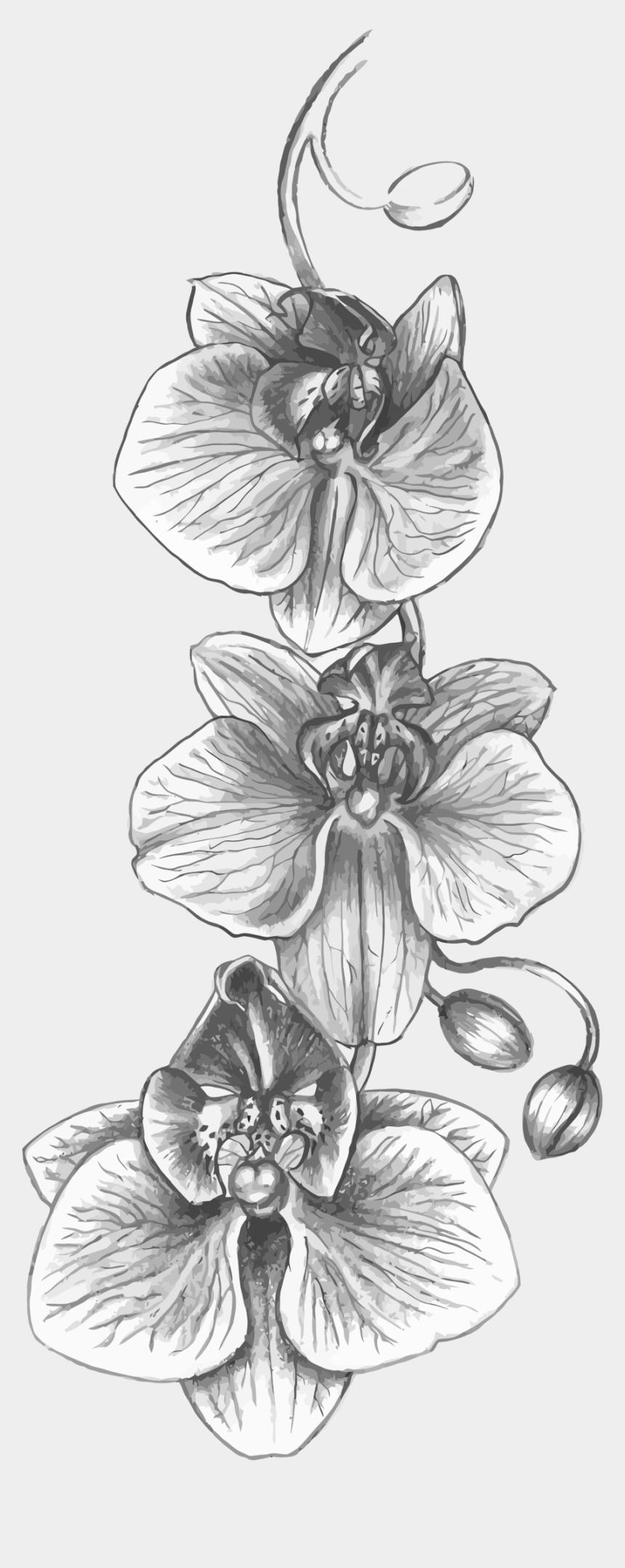 Gladiolus Tattoo Black And White
