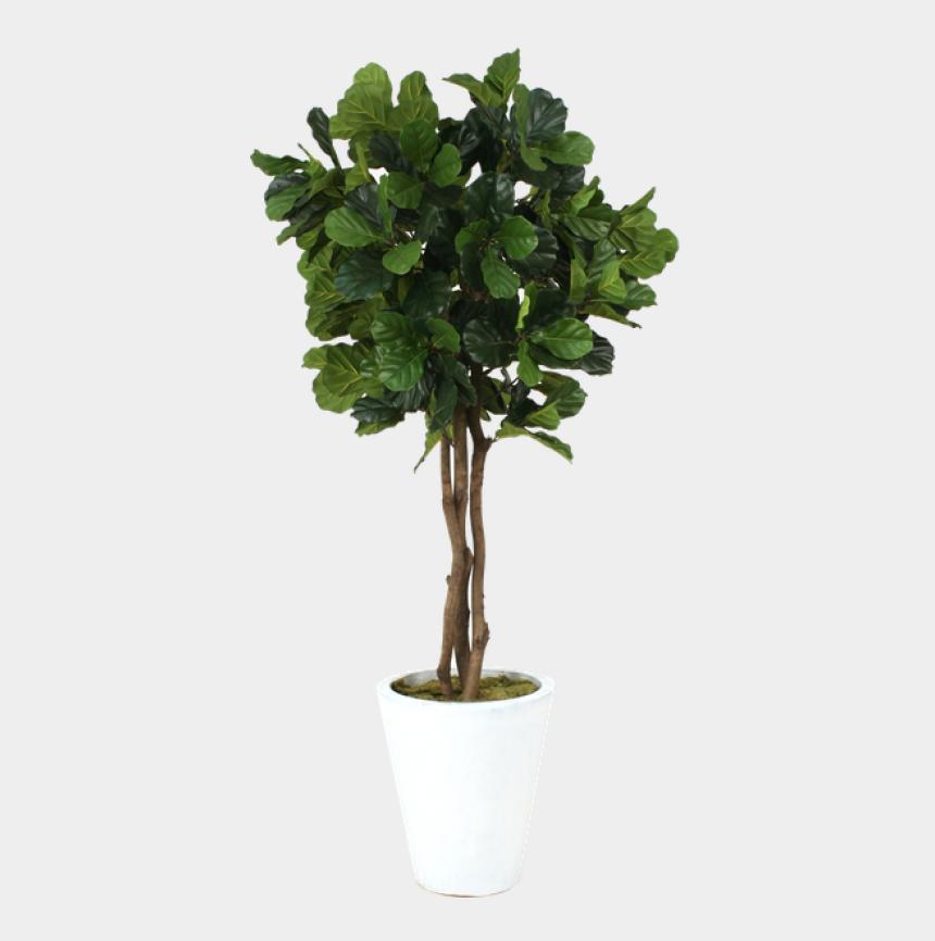 fig tree clipart, Cartoons - Fiddle Leaf Fig Png 2 » Png Image - Flowerpot