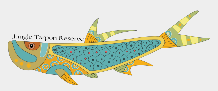 fly fishing flies clipart, Cartoons - Jungle Tarpon Reserve Experience Fly Fishing For Giant