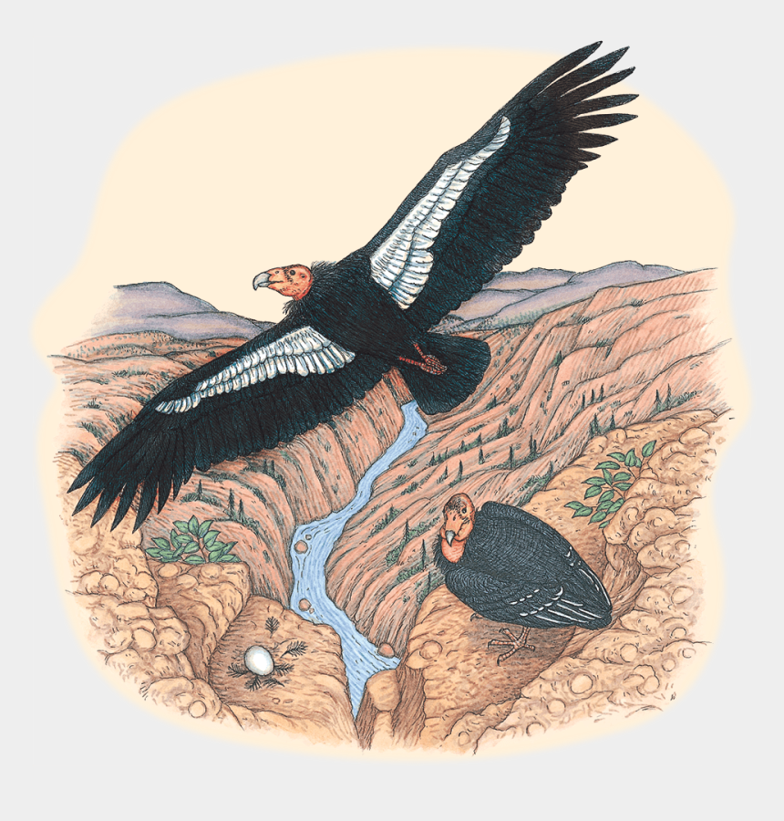 going going gone clipart, Cartoons - Endangered-condor - Red-tailed Hawk