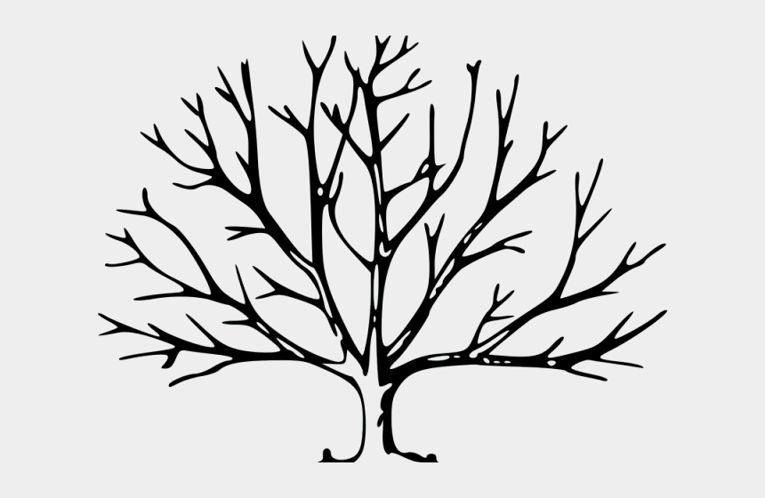 pecans clipart, Cartoons - Drawn Tree Pecan - Leave Less Tree Drawing