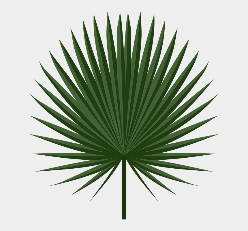 palm fronds clipart, Cartoons - Image Result For Cabbage Leaves Egypt Game Ⓒ - Palm Tree Leaf Png