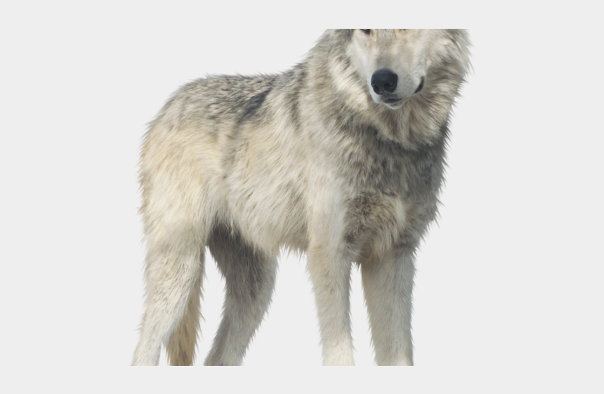 dingo clipart, Cartoons - Coyote Clipart Winter Wolf - Portable Network Graphics