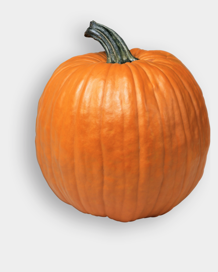 pumpkin farm clipart, Cartoons - School Tours - Pumpkin Png