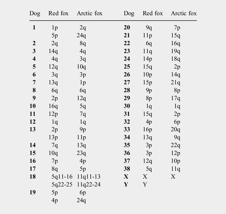chromosomes clipart, Cartoons - Arctic Fox Png - Many Chromosomes Does An Arctic Fox Have