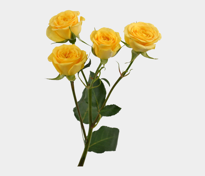flower stems clipart, Cartoons - Yellow Rose Flower Free Png Transparent Images Free - Yellow Tumblr Aesthetic Png