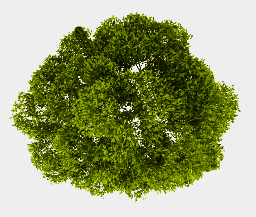 treetop clipart, Cartoons - Tree Top View Transparent - Trees Top View Png