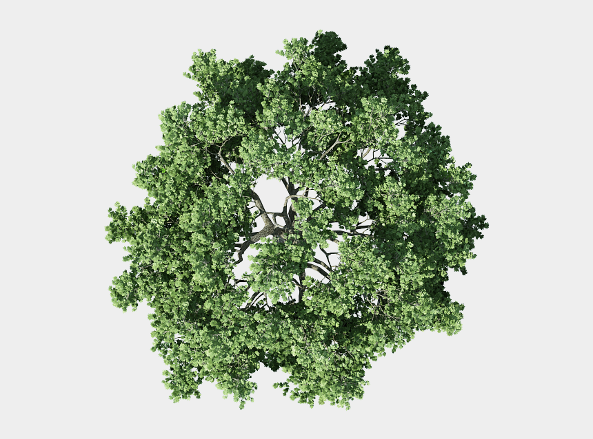 treetop clipart, Cartoons - Pics For U003e Tree Top View - Transparent Tree Top View