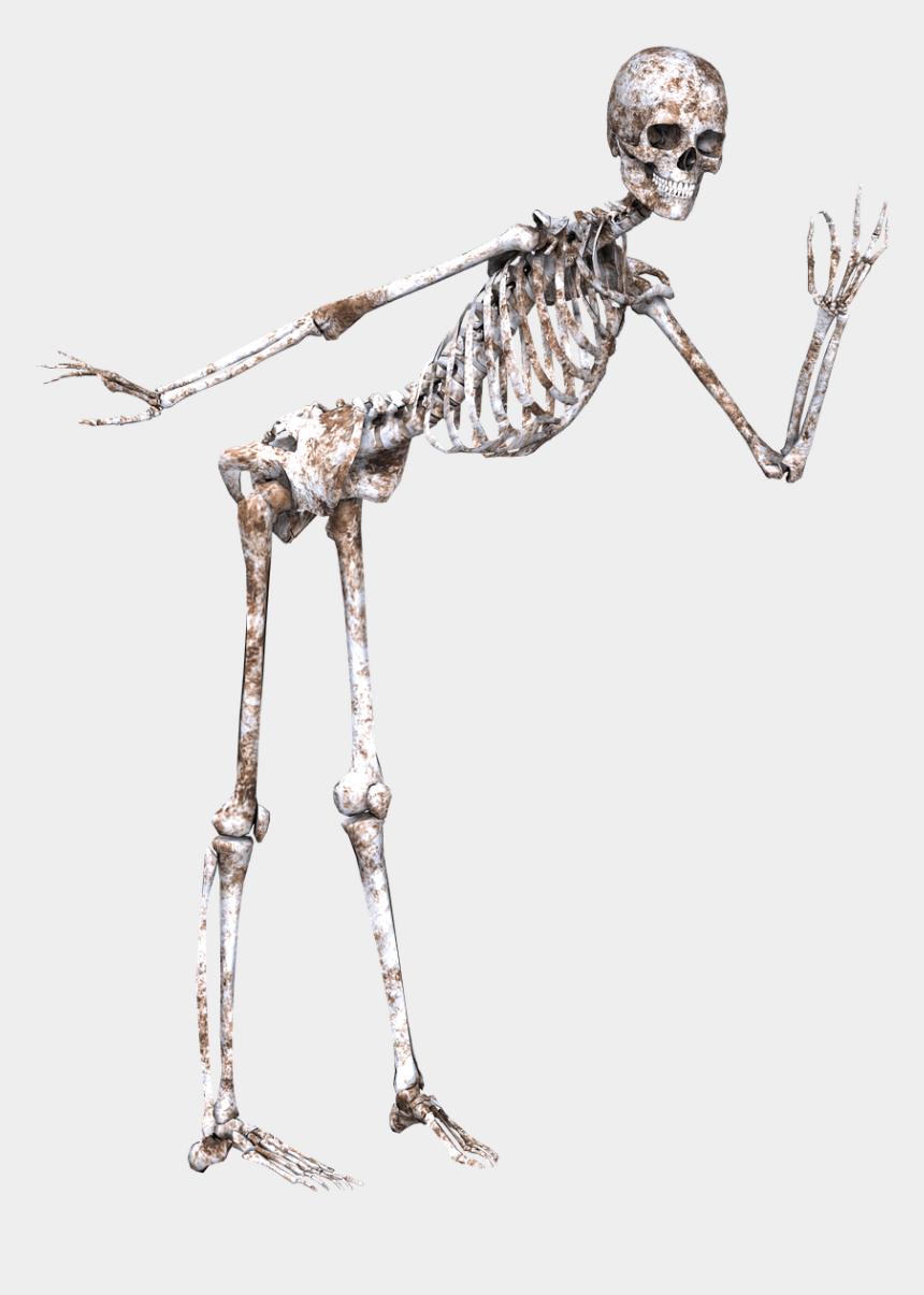 running skeleton clipart, Cartoons - Skulls And Skeletons - Skull