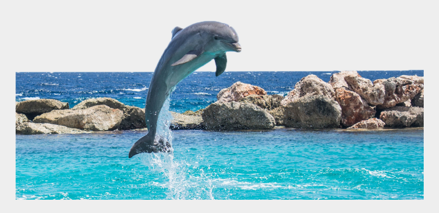 dolphins jumping out of water clipart, Cartoons - Dolphin In Water - Real Life Dolphin Jumping