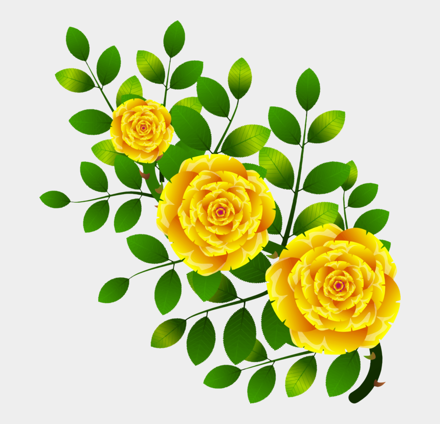 free yellow rose clipart, Cartoons - Garden Roses Flower Floral Design Yellow Rose Family - Vector Rosa Amarilla Png