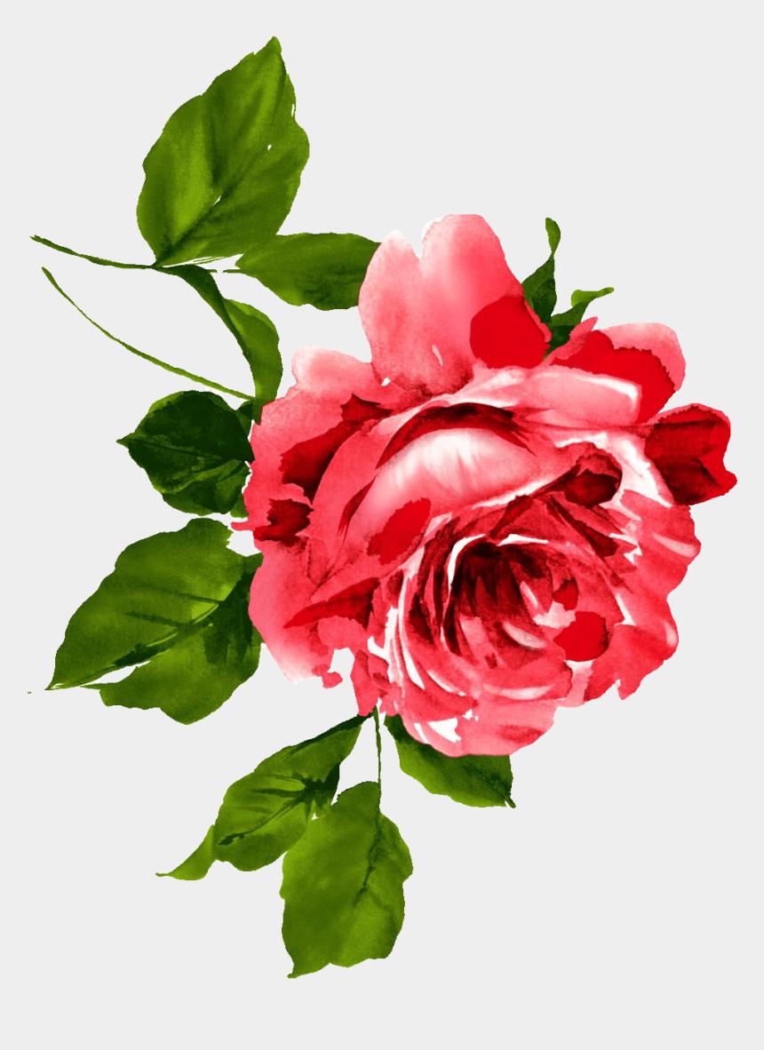 watercolor rose clipart, Cartoons - Cupcake Drawing, Watercolor Rose, Watercolor Paintings, - Peony Chinese Flowers