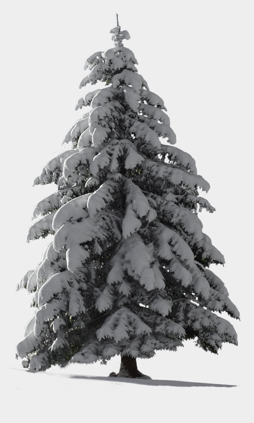 winter tree clipart black and white, Cartoons - Snow Pine Png - Christmas Tree Snow Png