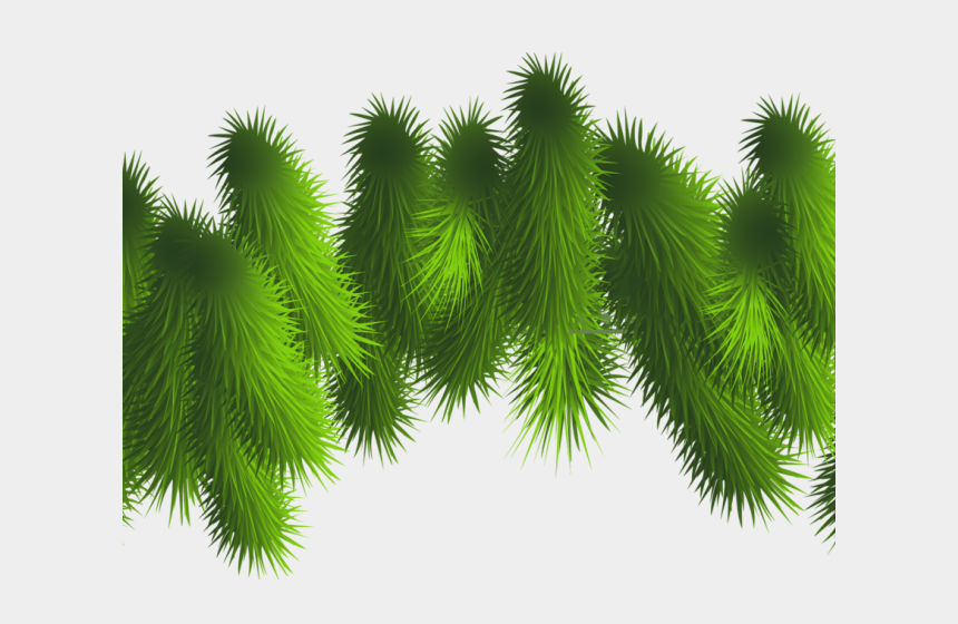 pine tree branch clipart, Cartoons - Pine Tree Clipart Leaf - Clip Art